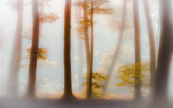 Wallpaper Forest, trees, yellow leaves, fog, morning, autumn
