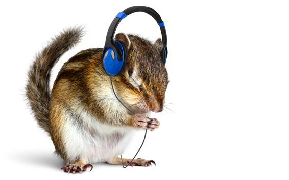 Обои Смешные животные, белка слушать музыку, наушники