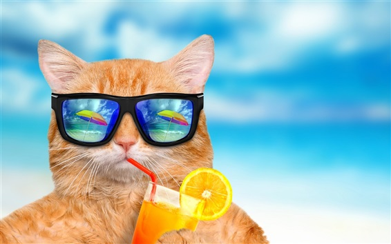 Wallpaper Funny animals, cat and sunglasses, eat drinks