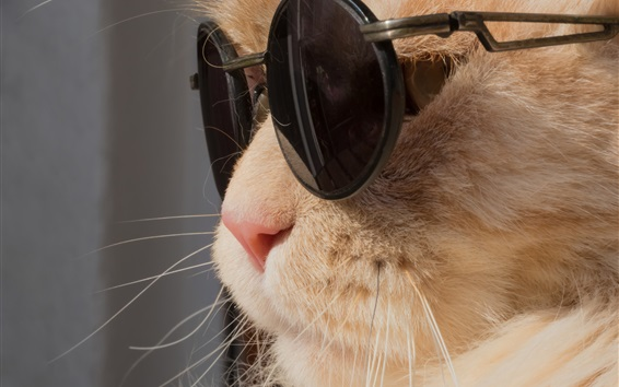 Wallpaper Funny cat, sunglasses