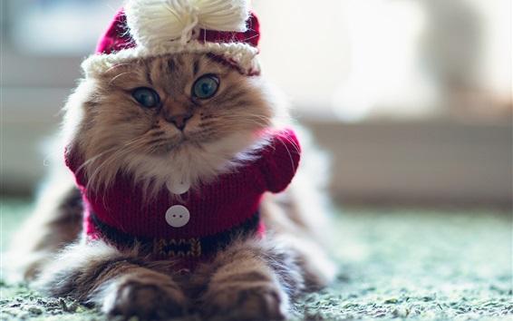Обои Забавный котенок, свитера, пушистые