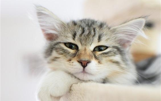 Обои Пушистый котенок лицо, усы