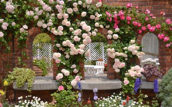 Fond d'écran Jardin rose rose fleurs, camomille, mur