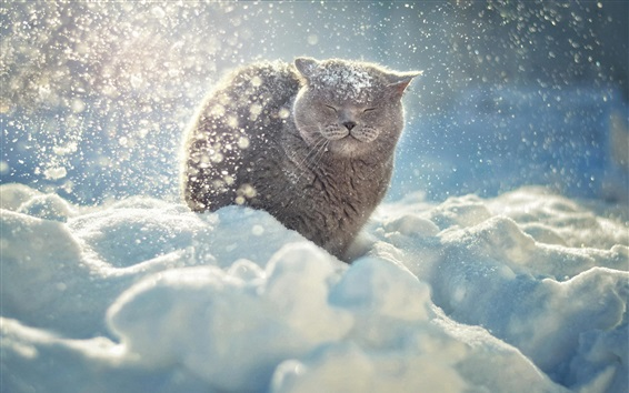 Wallpaper Gray cat in the thick snow winter