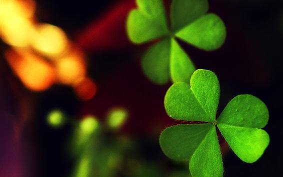 Wallpaper Green clover, night, light