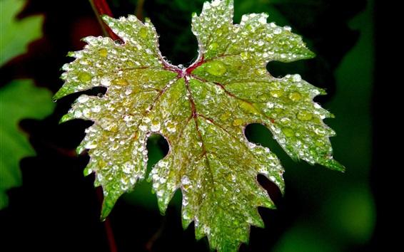 Обои Leaf макросъемки, роса, мороз