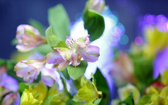 Fond d'écran Clair, rose, fleurs, gros plan, barbouillage, fond