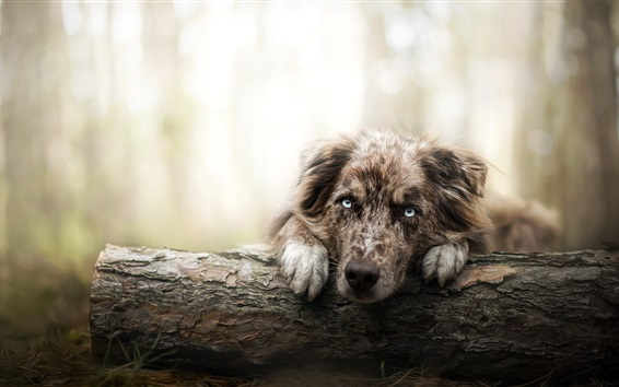 Wallpaper Lonely dog in forest, face, eyes