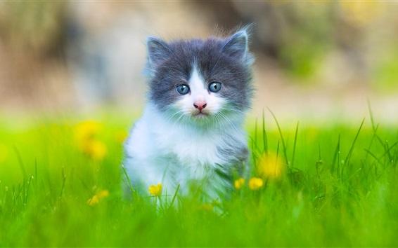 Обои Прекрасный пушистый котенок в траве