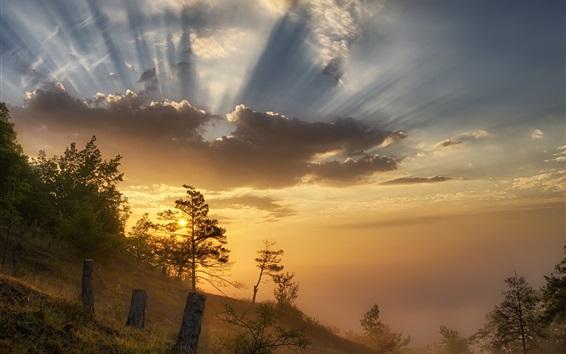 Обои Утро, туман, восход солнца, облака, склон, деревья
