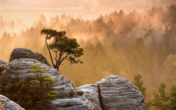 Hintergrundbilder Morgen Natur Landschaft, Bäume, Nebel, Steine, Sonnenstrahlen