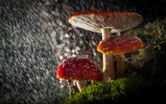 Papéis de Parede Cogumelos, chuva