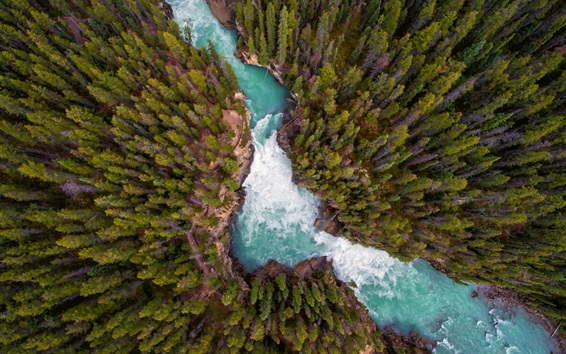 Wallpaper Nature landscape, forest, river, top view