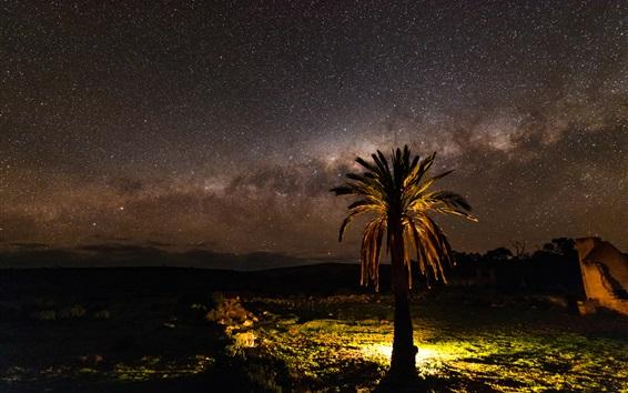 Wallpaper Night, tree, lights, stars, Palma