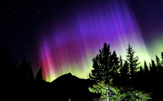 壁紙 ノーザンライト、夜、山、木、星