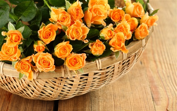 Wallpaper Orange rose flowers, basket
