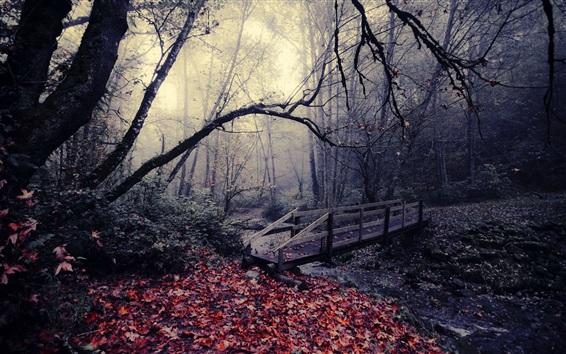 Wallpaper Park, autumn, wood bridge, trees, leaves