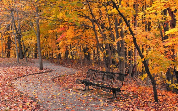 Wallpaper Park, bench, trees, path, red leaves, autumn