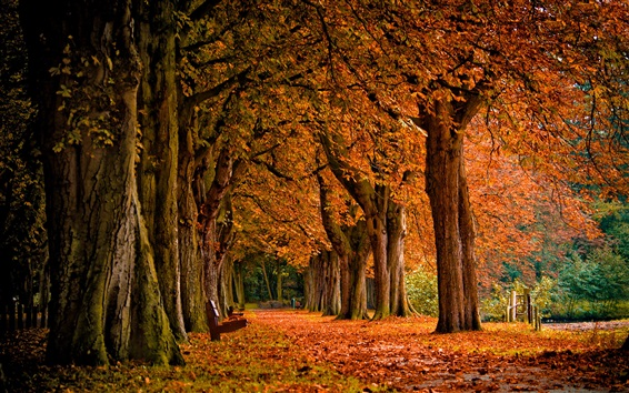 Papéis de Parede Parque, árvores, folhas vermelhas, banco, paisagem de outono