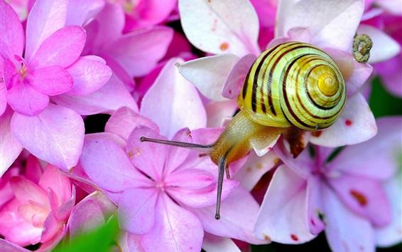 Обои Розовые гортензии, улитки, насекомые