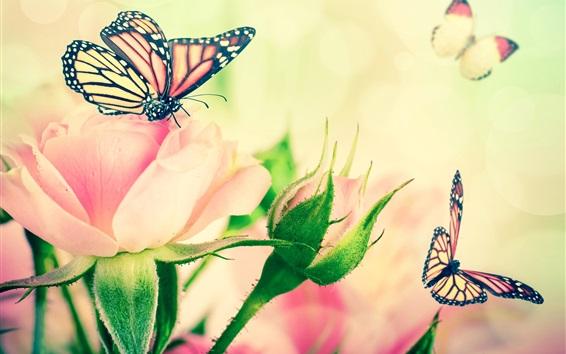 Fond d'écran Rose, rose, fleurs, papillon, feuilles, bourgeons