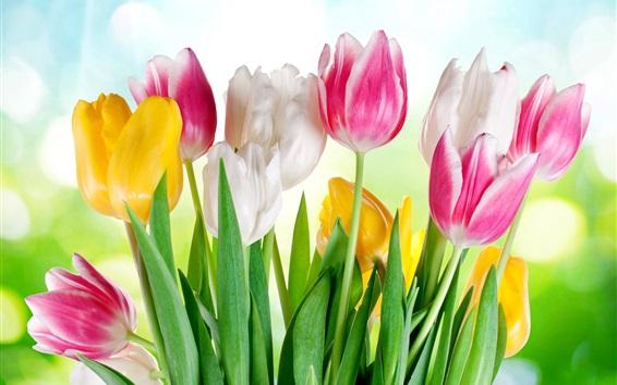Papéis de Parede Pink tulipas amarelas brancas, luz do sol, brilho