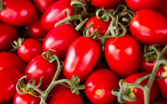 Wallpaper Red tomatoes, beautiful vegetable