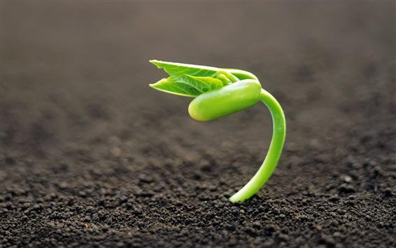 Papéis de Parede Germinação de sementes, primavera