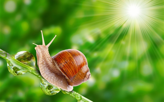 Wallpaper Snail under sunshine