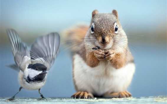 Wallpaper Squirrel and bird photography