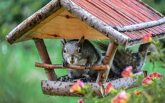Wallpaper Squirrel with its house