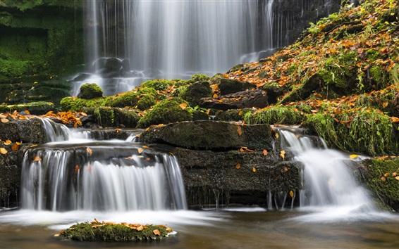Wallpaper Stream, waterfall, leaves, moss, Yorkshire, UK