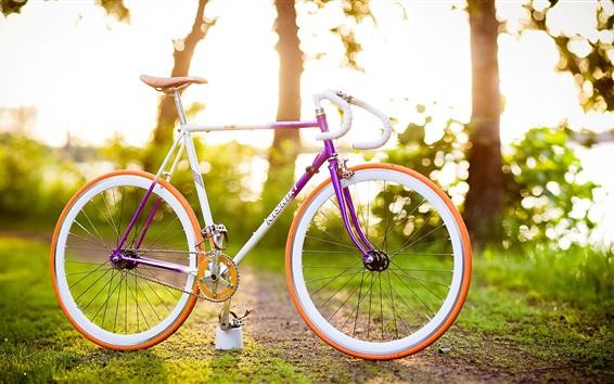 Обои Солнечные лучи, деревья, трава, велосипед
