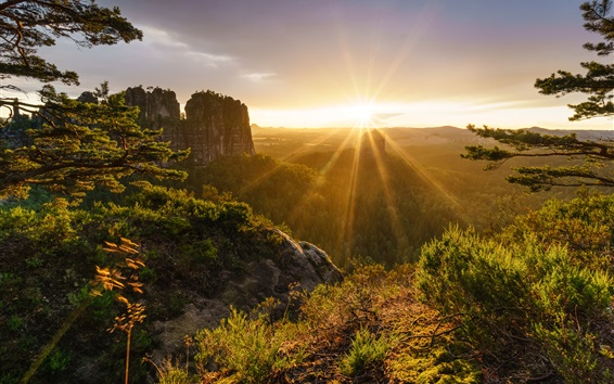 Fond d'écran Suisse nature paysage, Alpes, montagnes, arbres, lever de soleil