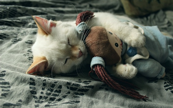 Papéis de Parede O gato está dormindo com uma boneca de pano