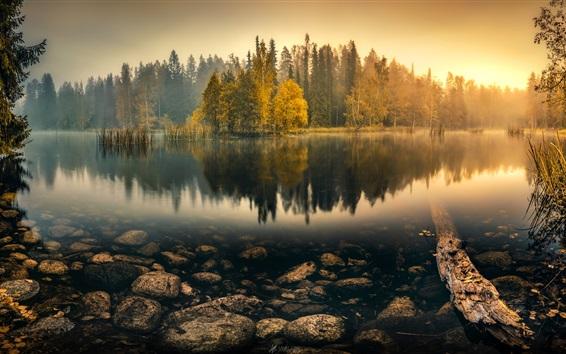 Papéis de Parede Manhã tranqüilo, lago, árvores, juncos, nevoeiro