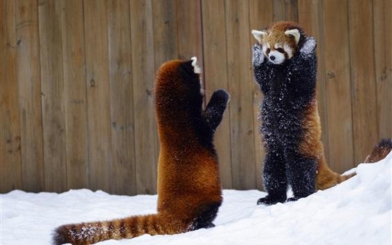 Papéis de Parede Dois, vermelho, pandas, levantar, mãos