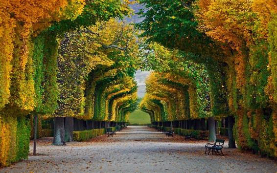 Обои Вена, Австрия, Осенний парк, скамейки, деревья