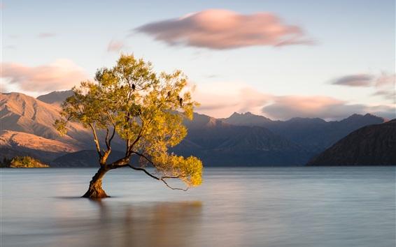 Wallpaper Wanaka, New Zealand, Otago, lake, one tree in water