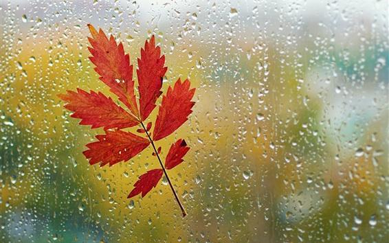 Wallpaper Window, red leaf, glass, raindrops