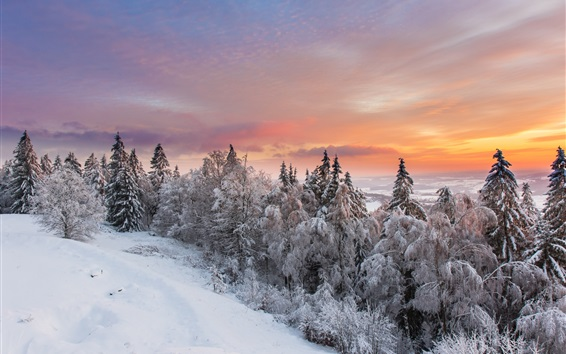 Wallpaper Winter nature landscape, snow, forest, sunset