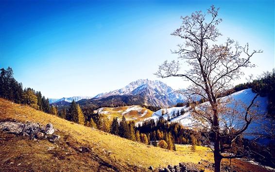 Обои Зима или осень, деревья, горы, снег, синее небо