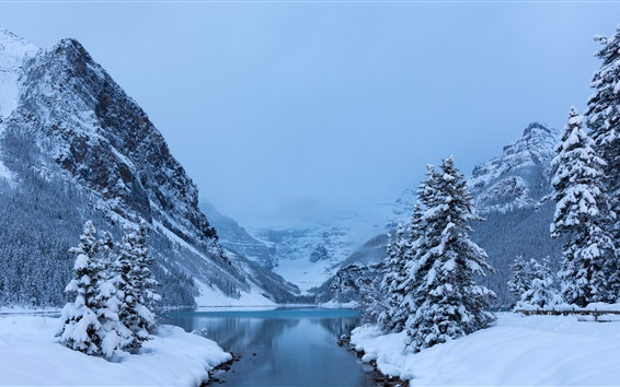 Wallpaper Winter, snow, trees, Lake Louise, Banff National Park, Canada nature landscape
