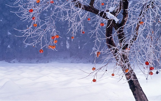 Wallpaper Winter, tree, red fruit, snow