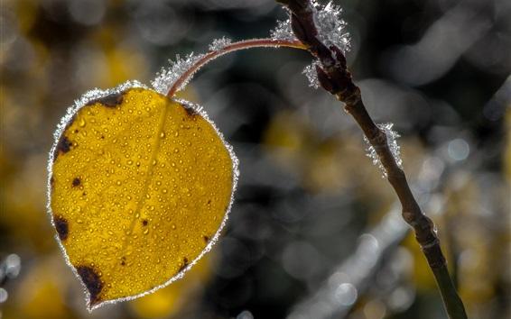 Papéis de Parede Folha amarela, geada, cristais de gelo, outono