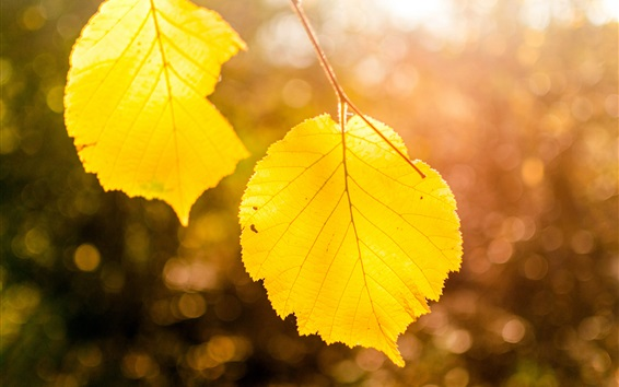 Wallpaper Yellow leaves close-up, bokeh, autumn