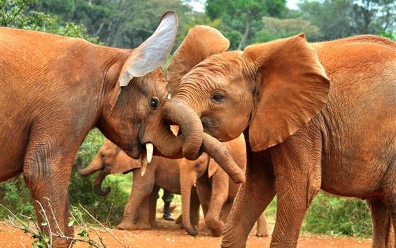 Обои Африканские животные, слоны