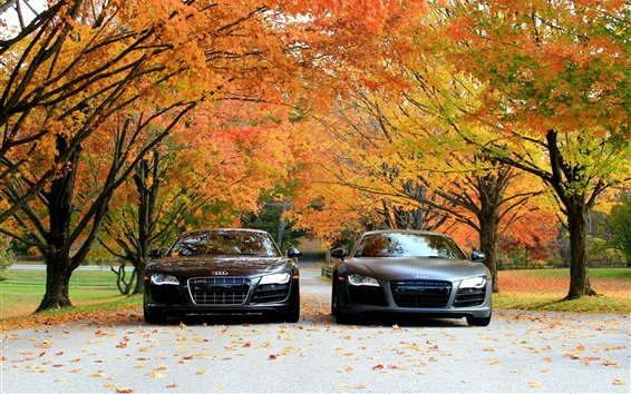 Wallpaper Audi R8 V10 cars front view, autumn, trees