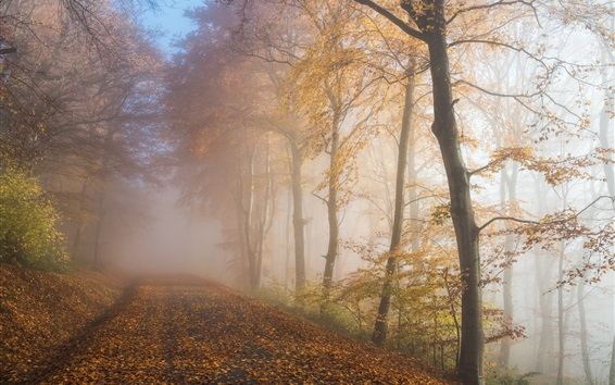 Wallpaper Autumn, forest, trees, fog, road, morning