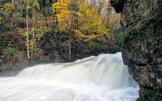 Wallpaper Autumn, tree, stream